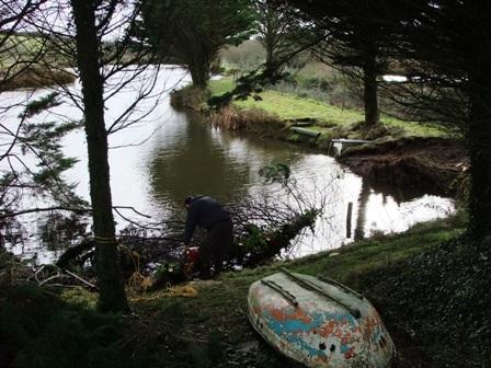 Fallen Tree on Heron Lake